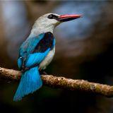 Birding Safari in Arusha National Park (daytour)