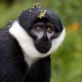 Primates of Rwanda (8 days)