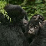 Best of Rwanda (14 days)