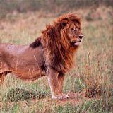 Southern Kenya (12 days)