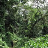Gorilla Tracking in Bwindi - Fly In (4 days)