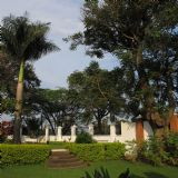Birding in and around Kampala (daytour)