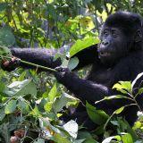 Best of Uganda & Tanzania (17 days)