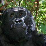 Primates of East Africa (18  days)