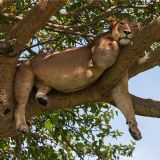 Photo Tour Uganda (10 days)