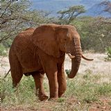 Northern Rift Kenya (9 days)