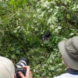 Gorilla Tracking in Bwindi (4 days)