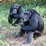 Ngamba Island and Uganda Wildlife Education Centre (daytour)