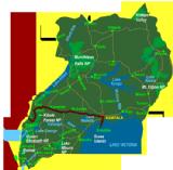 Hiking the Rwenzori (10 days)