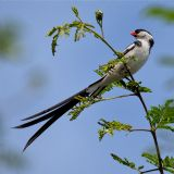Birding in and around Kampala (daytour)
