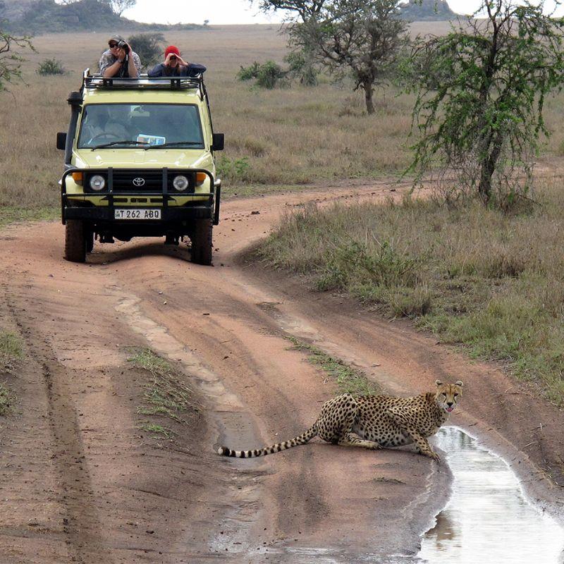 Kazinga tours and safaris uganda rwanda tanzania best of best of uganda rwanda tanzania 18 days stopboris Images